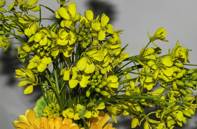 Closeup of mustered plant flowers. Closeup of beautiful bunch of mustered plant flowers,yellow colored with white background royalty free stock photos