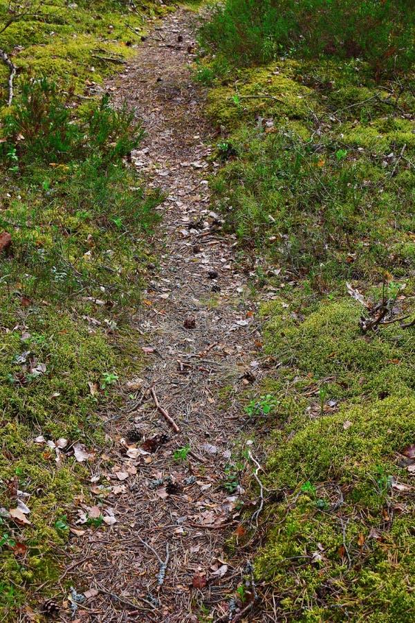 Closeup of narrow footpath royalty free stock photography