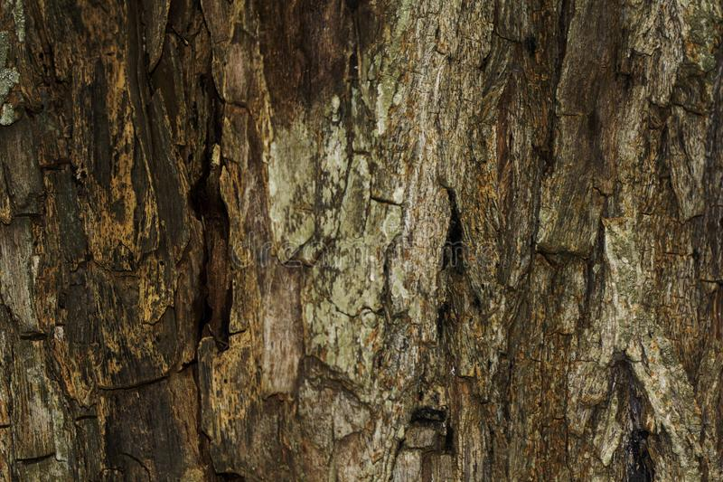 Closeup of natural tree bark texture. Ideal as a texture background for graphic design images stock images