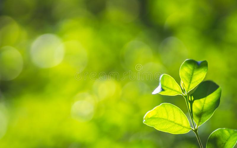 Closeup nature fresh green tree leaves on blurred bokeh greenery background in garden. Green natural wallpaper concept with copy stock photo