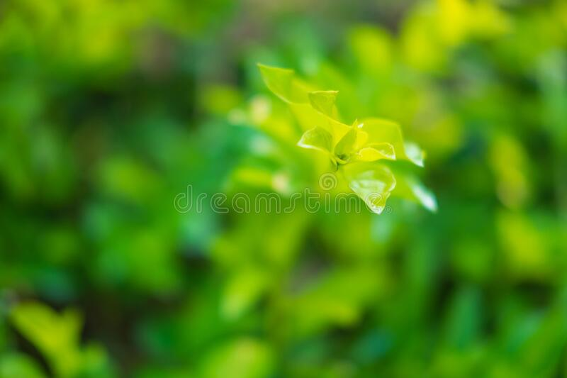 Closeup nature  green leaf  fresh wallpaper concept. Closeup nature green leaf fresh wallpaper concept royalty free stock photography