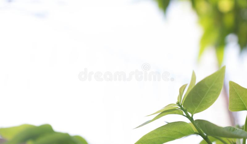 Closeup nature view of green leaf on blurred background in garden with copy space using as background natural royalty free stock photo