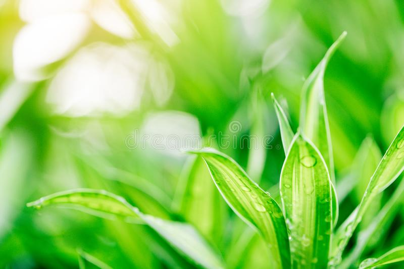 Closeup nature view of green leaf on blurred greenery background royalty free stock photos