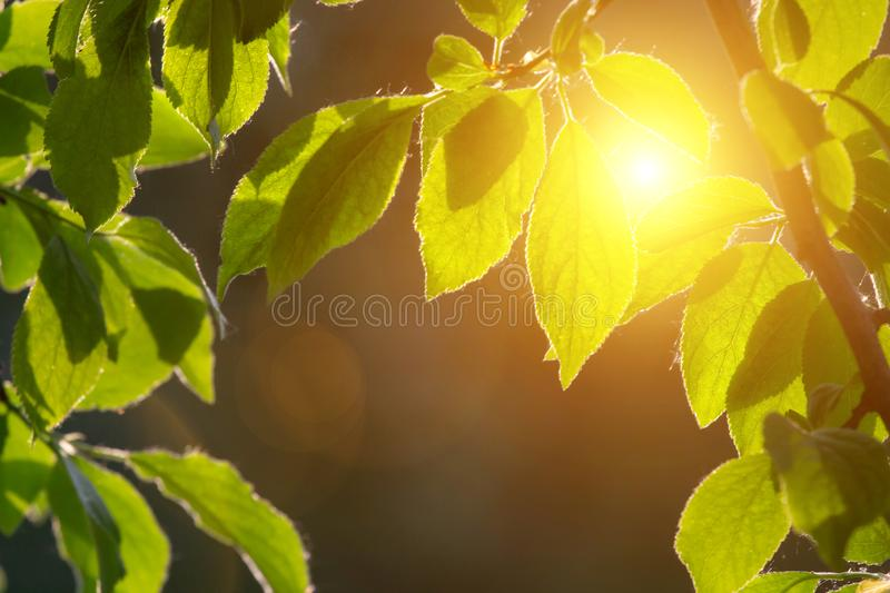 Closeup nature view of green leaf on blurred greenery background in garden with copy space using as background natural green stock photography