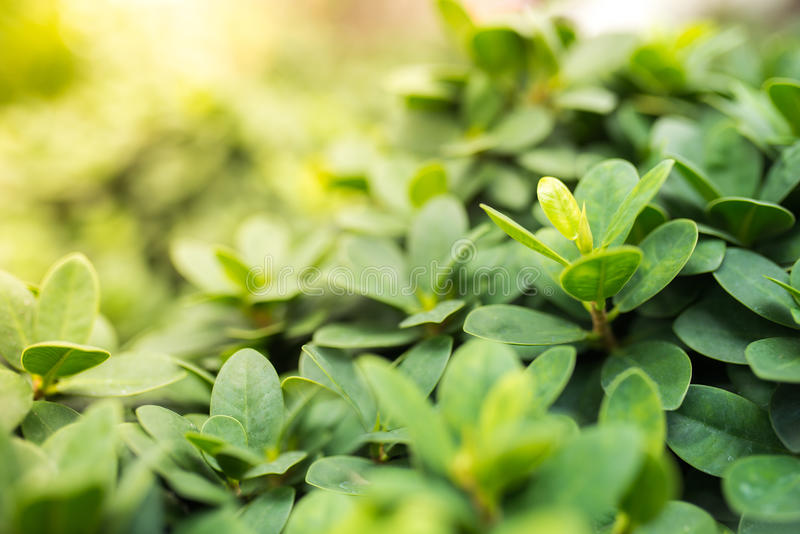 Closeup nature view of green leaf in garden at summer under sunlight. stock images