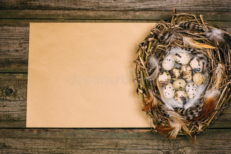 Closeup nest with quail eggs and feather in right side of sheet of paper for text on wood background stock images