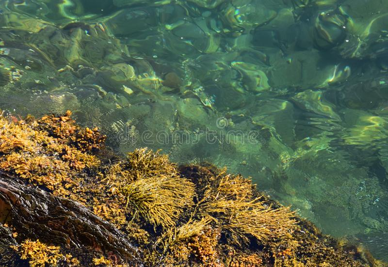 closeup of the ocean surface with kelp border stock photography