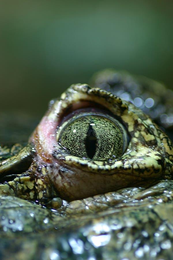 Free Closeup Of A Crocodile S Eye Royalty Free Stock Photos - 144388
