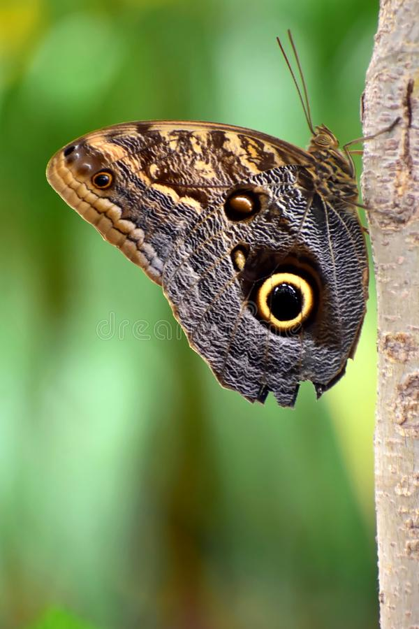 Free Closeup Of Butterfly Stock Image - 104811671