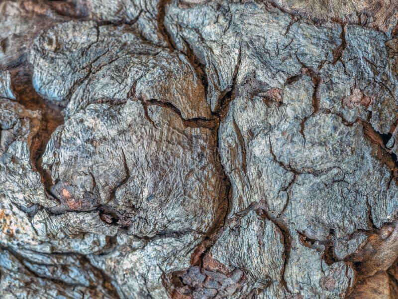 Closeup of old dead log in Centrqal Park royalty free stock image