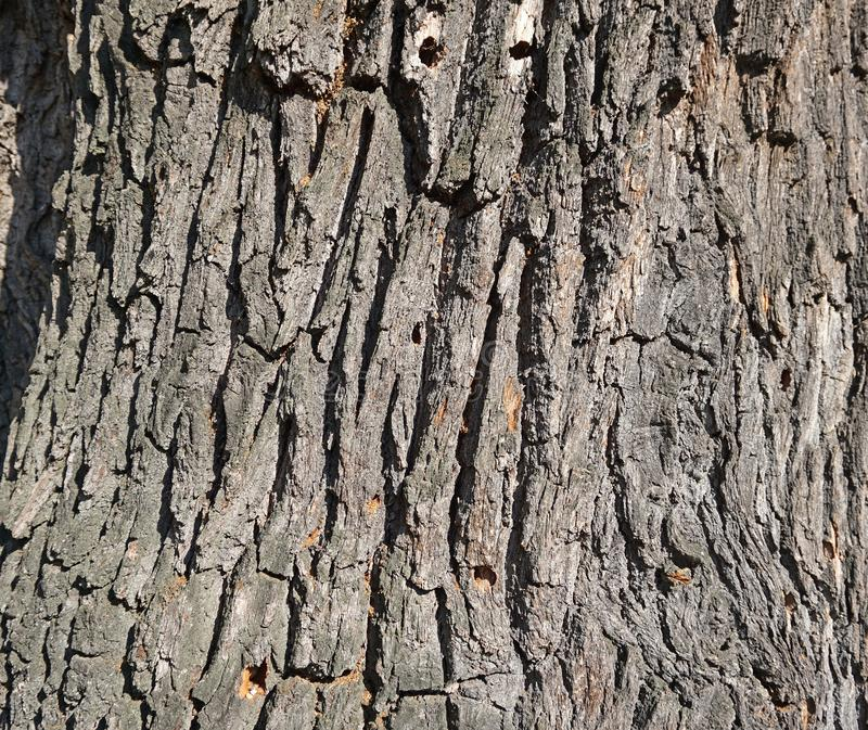Closeup of an old oak tree trunk stock photo