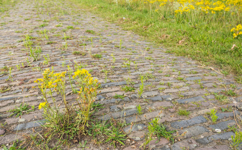Closeup of an old paved road overgrown with weeds royalty free stock images