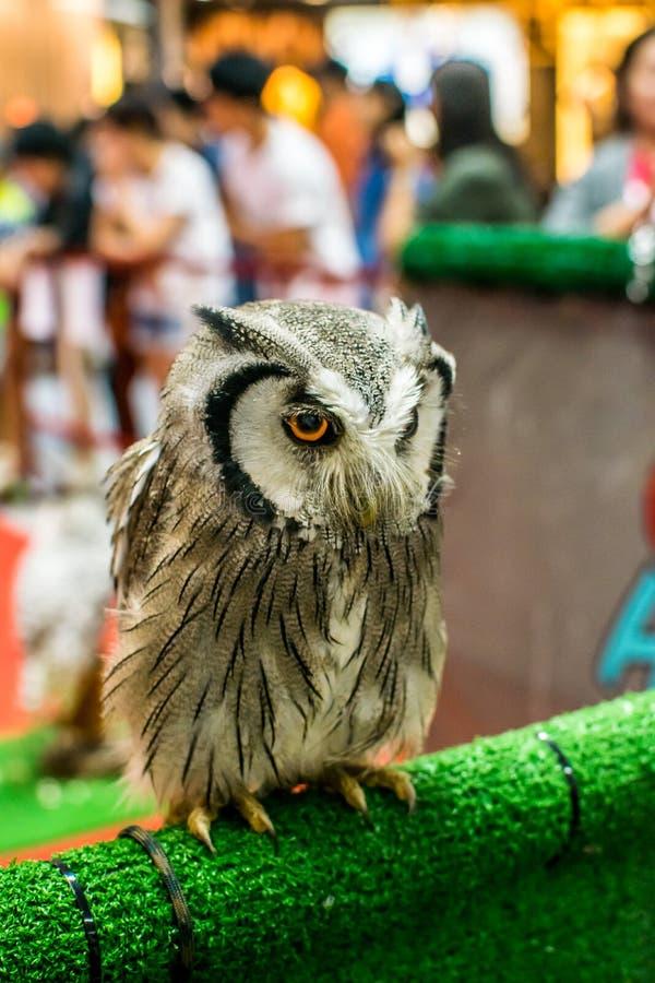 Closeup an owl Eyes royalty free stock image
