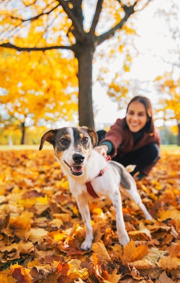 Closeup på hund på koppeln som utomhus drar den unga kvinnan arkivfoto