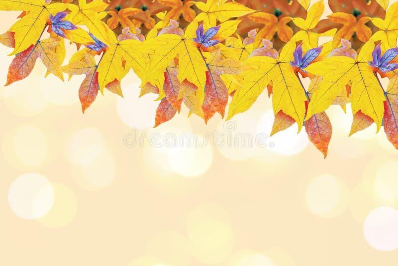 Closeup på lönnlöv på ljust gult varmt ljus royaltyfria foton