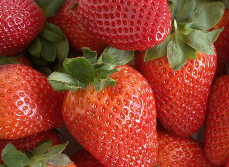Closeup på nytt organiska röda mogna jordgubbar Mogna bär för sommar läcker frukt arkivfoto