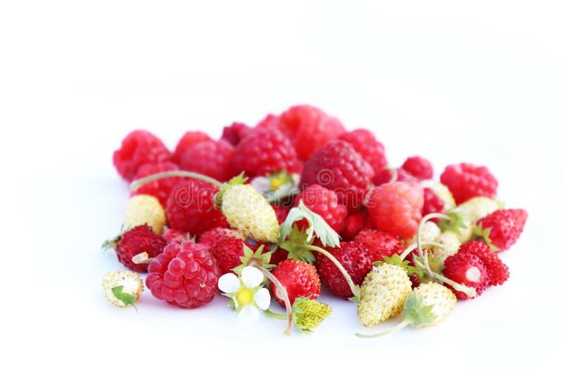Closeup på nytt organiska röda mogna jordgubbar och hallon som ligger på en vit bakgrund Mogna bär för sommar arkivbild
