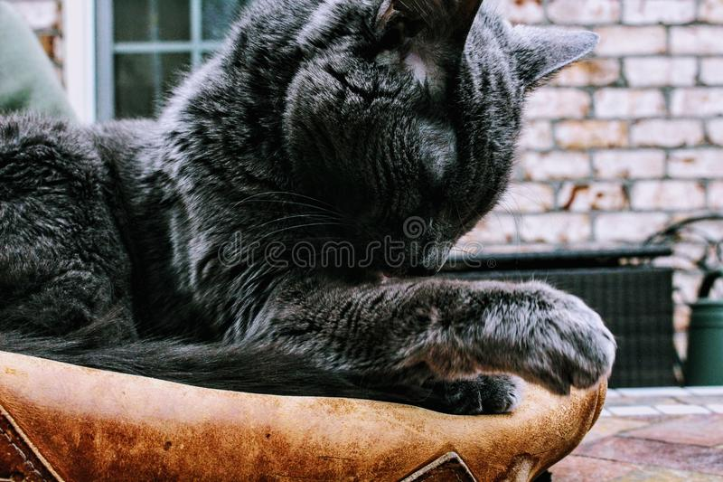 Closeup Photo of Black Cat royalty free stock photos