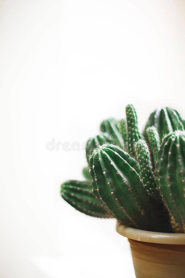 Closeup Photo Of Cactus Plant In A Pot Free Public Domain Cc0 Image