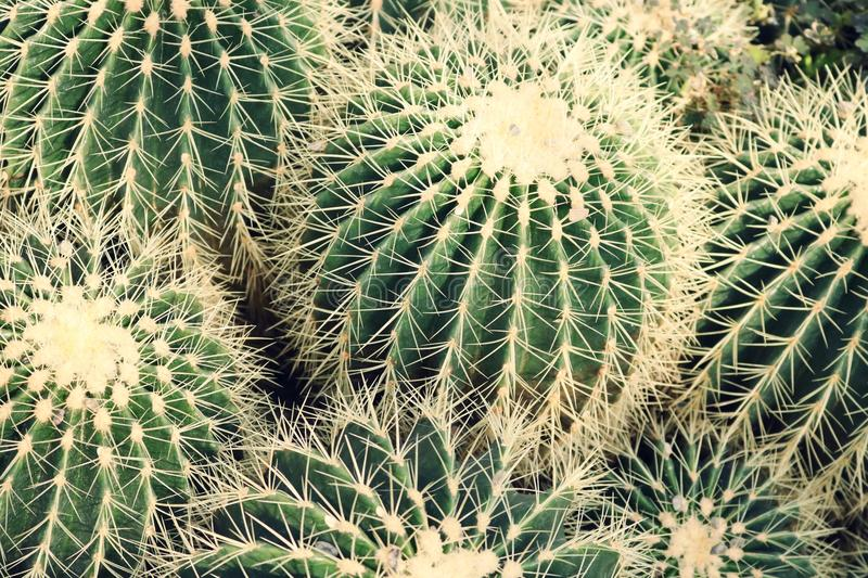 Closeup Photo of Cactus Plants stock photography