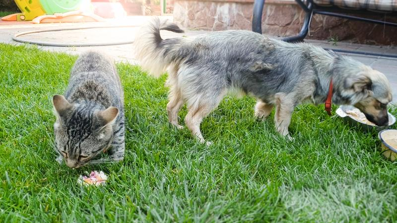 Closeup image of cute dog and cat eating on the grass. Closeup photo of cute dog and cat eating on the grass stock photos