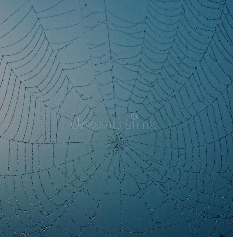 Closeup Photo de Spider Web with Dew Drops image stock