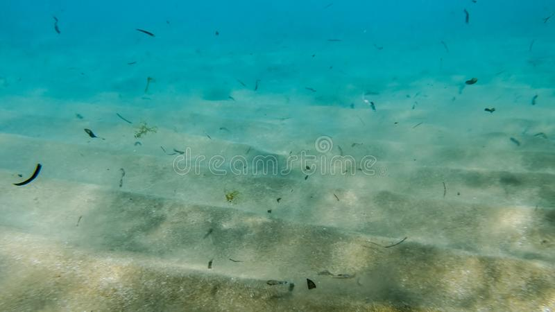 Closeup image of dirty sandy sea bottom with lots of dead sea weeds flowing in the water stock images