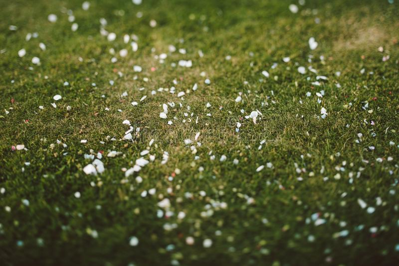 Closeup Photo of Green Grass stock images