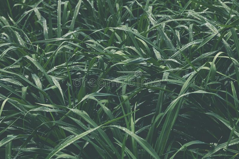 Closeup Photo of a Green Grass Field stock photos