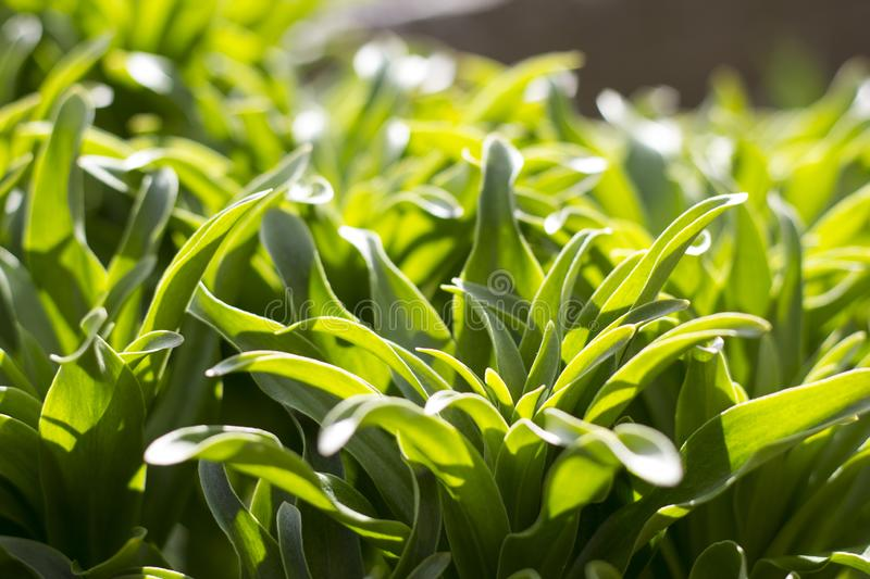 Closeup of green herbs. A closeup photo of green herbs in a sunny day royalty free stock photo