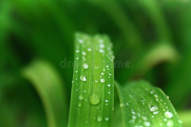 Closeup Photo of Green Leafed Plant With Water Dew royalty free stock images
