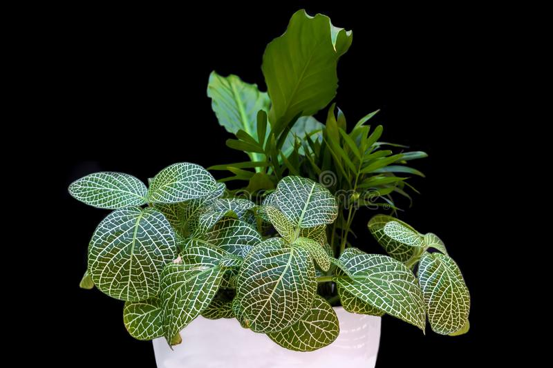 Home plant in front of black background stock photos