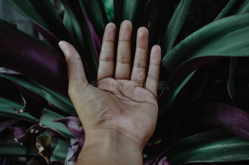 Closeup Photo of Left Human Palm stock photography