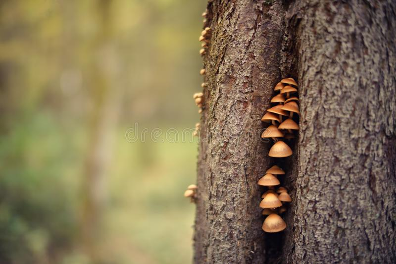Closeup Photo Of Mushrooms On Tree Trunk royalty free stock image