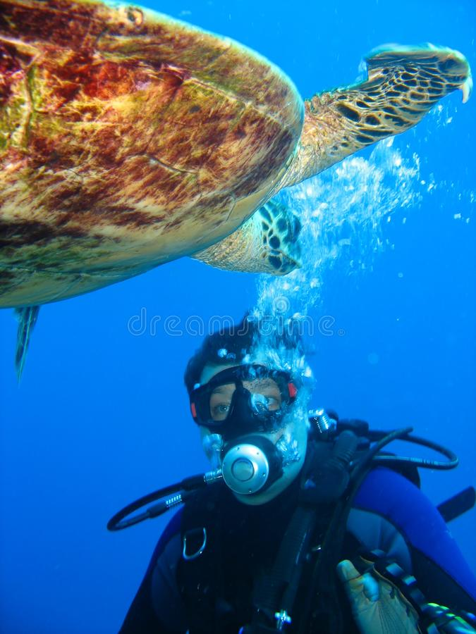 Closeup photo of a sea turtle and a scuba diver. They look at each other. royalty free stock image