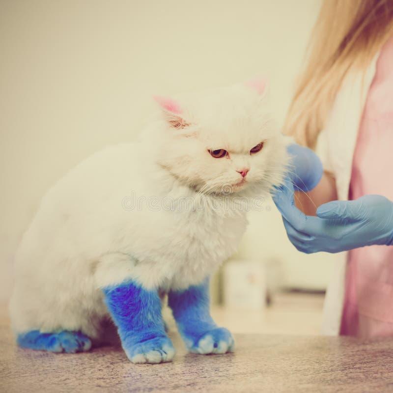 Cat visiting veterinarian royalty free stock images
