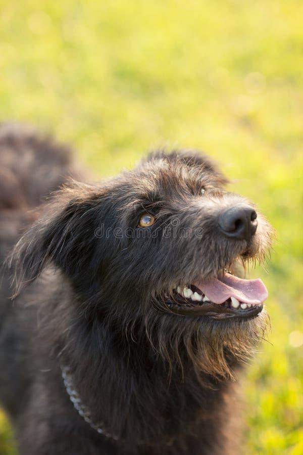 Closeup Photography of Black Dog stock photography
