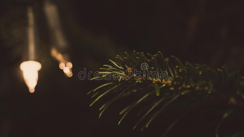 Closeup Photography of Green Leaf Tree royalty free stock photography