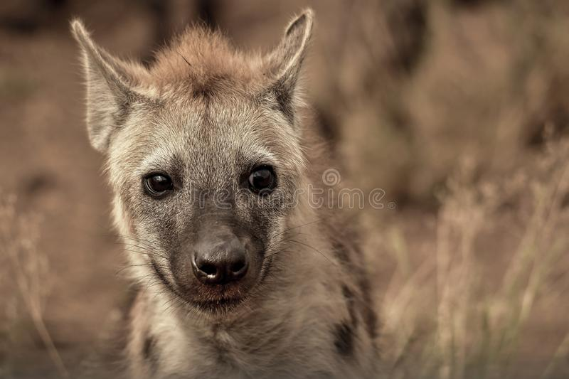 Closeup Photography of Grey and Tan Animal royalty free stock images