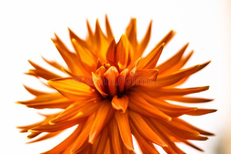 Closeup Photography of Orange Petaled Flowers stock image