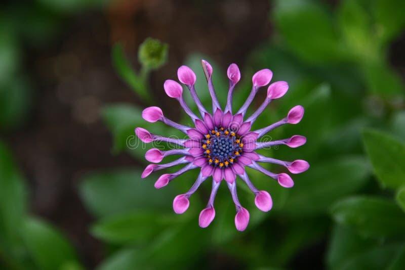 Closeup Photography Of Pink Petal Flower Free Public Domain Cc0 Image
