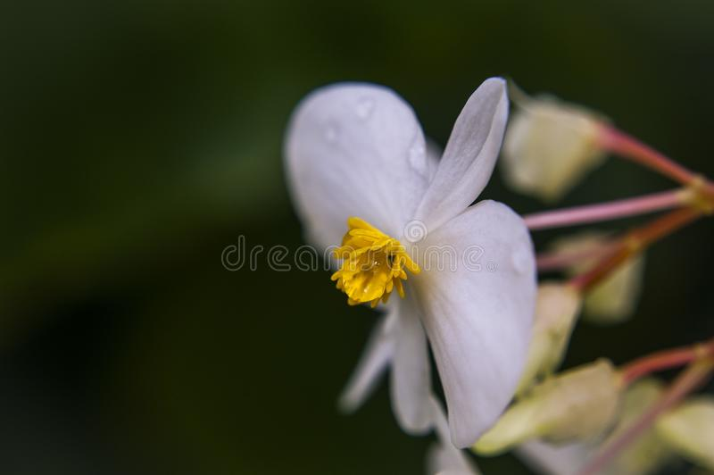 Closeup Photography Of White Flower royalty free stock images