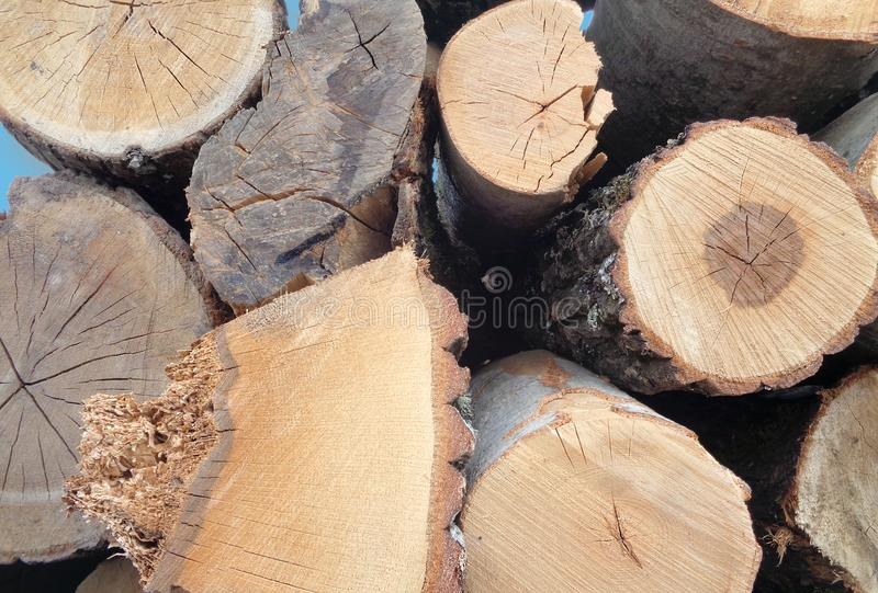 Closeup of pile of trunks of trees stock image