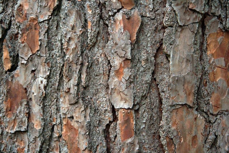 Closeup pine bark stock photos
