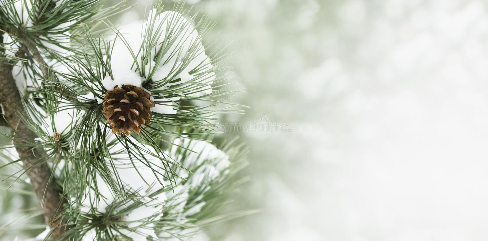 Pine branch under snow stock images