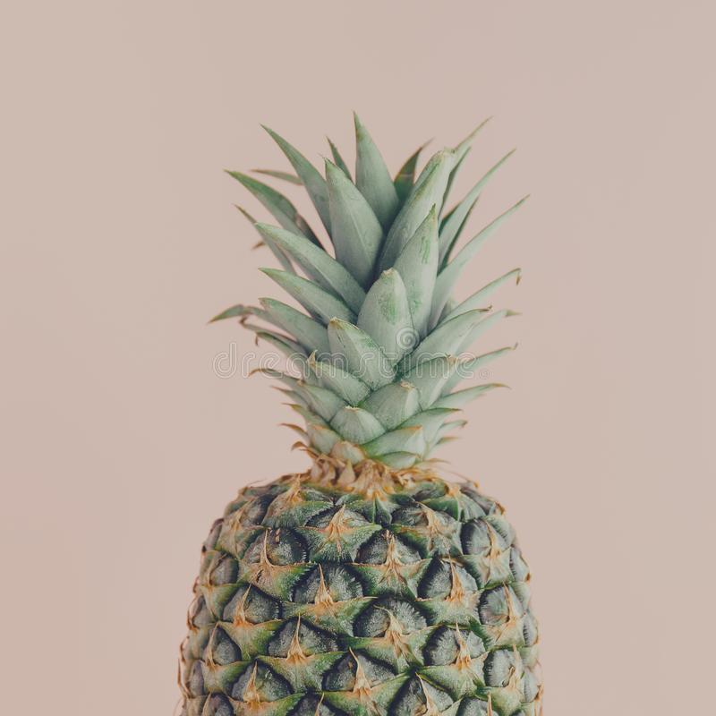 Closeup of pineapple on pink. Closeup shot of ripe pineapple fruit with green foliage composed on pink royalty free stock photography