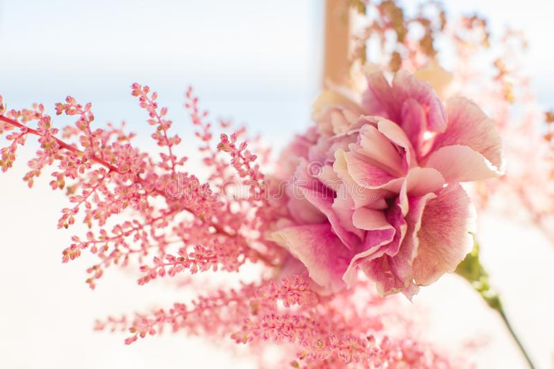 Close up pink astilbe and carnation flowers at bright day with blurred background.  stock photography
