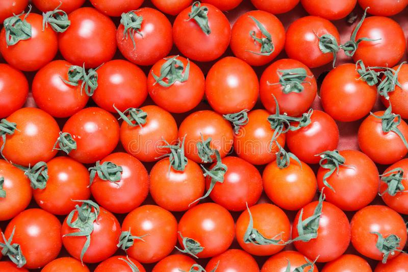 Closeup plenty red fresh ripe cherry tomatoes together with stems are awaiting distribution in box on farmers market. Concept of royalty free stock photo