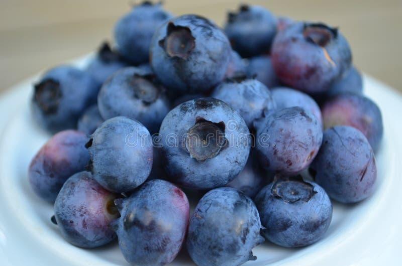 Closeup of plump organic fresh picked blueberries royalty free stock photo