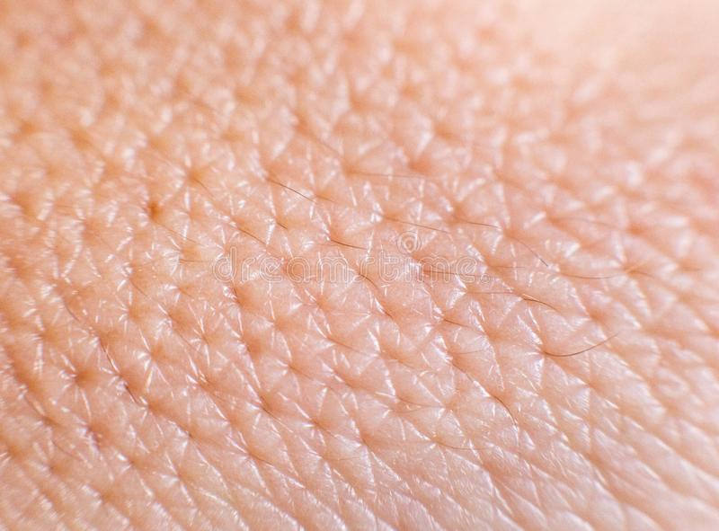 Closeup of porous oily human skin. Large pores on the skin, background, macro, cosmetology royalty free stock images